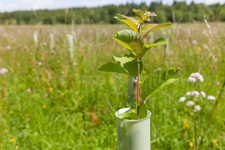 Make airlines and oil firms pay for tree-planting boom, says UK report